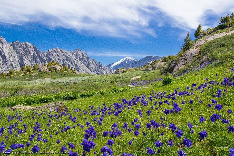 Алтайские бальзамы: виды и полезные свойства