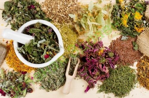Полезные свойства и особенности травяных сборов