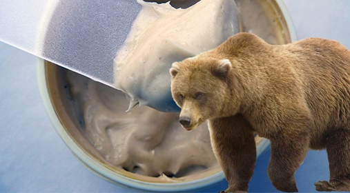 Полезные свойства медвежьего жира